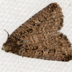 Condica aroana (A Noctuoid moth) at Melba, ACT - 14 Jan 2021 by Bron