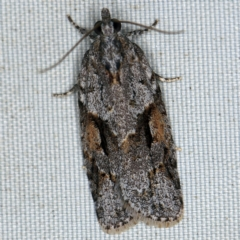 Acropolitis rudisana (A leafroller moth) at Deua National Park (CNM area) - 16 Apr 2021 by ibaird