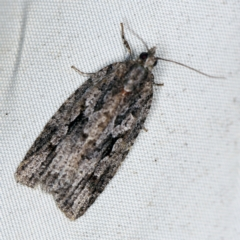 Acropolitis ergophora (A tortrix or leafroller moth) at Deua National Park (CNM area) - 16 Apr 2021 by ibaird
