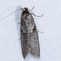 Lepidoscia euryptera (A case moth) at Melba, ACT - 25 Apr 2021 by kasiaaus