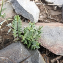 Unidentified Plant (TBC) at Namadgi National Park - 14 Apr 2021 by Liam.m