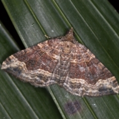 Epyaxa subidaria (Subidaria Moth) at Melba, ACT - 9 Jan 2021 by Bron