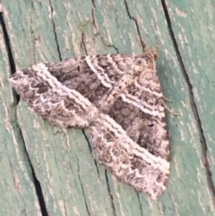 Chrysolarentia subrectaria (Geometrid moth) at Tharwa, ACT - 29 Apr 2021 by Ned_Johnston