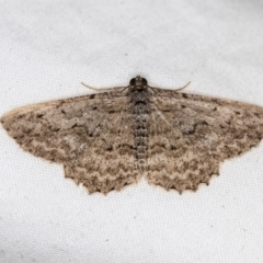 Psilosticha absorpta (Fine-waved Bark Moth) at Melba, ACT - 6 Apr 2021 by Bron
