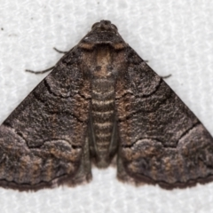 Dysbatus undescribed species (A Line-moth) at Melba, ACT - 30 Dec 2020 by Bron