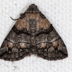 Dysbatus undescribed species (A Line-moth) at Melba, ACT - 29 Dec 2020 by Bron