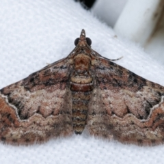 Chloroclystis metallospora (A Geometer moth (Larentiinae)) at Melba, ACT - 30 Apr 2021 by kasiaaus