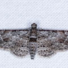 Chloroclystis insigillata (Insigillated Carpet) at Melba, ACT - 1 May 2021 by kasiaaus