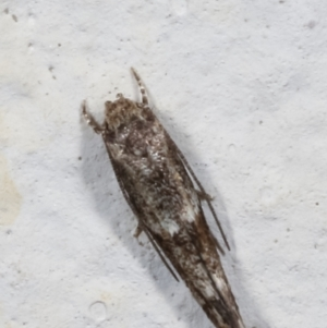 Unidentified at suppressed - 3 May 2021