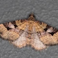 Epyaxa subidaria (Subidaria Moth) at Melba, ACT - 27 Dec 2020 by Bron