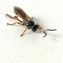 Unidentified Wasp (Hymenoptera, Apocrita) (TBC) at Acton, ACT - 7 May 2021 by YellowButton