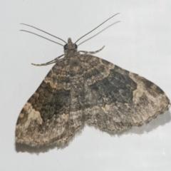 Epyaxa sodaliata (Epyaxa sodaliata) at Googong, NSW - 6 May 2021 by WHall