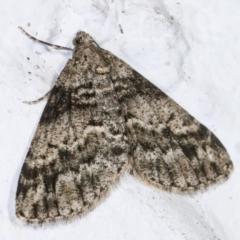 Lipogya exprimataria (Jagged Bark Moth) at Melba, ACT - 4 May 2021 by kasiaaus
