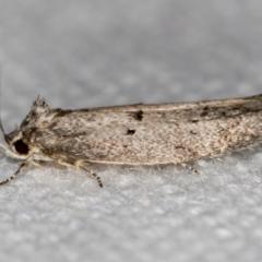 Heterozyga coppatias (A concealer moth) at Melba, ACT - 24 Dec 2020 by Bron