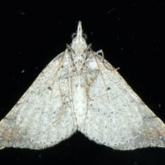 Anachloris uncinata at Ainslie, ACT - 8 May 2021