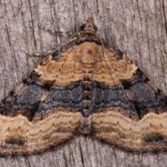 Epyaxa subidaria (Subidaria Moth) at Melba, ACT - 13 May 2021 by kasiaaus