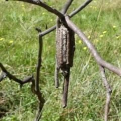 Clania ignobilis (Faggot Case Moth) at Forde, ACT - 2 Apr 2021 by HarveyPerkins