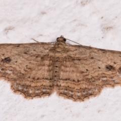 Xanthorhoe anaspila (Dark-patch Carpet) at Melba, ACT - 22 May 2021 by kasiaaus