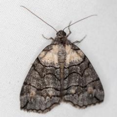 Dysbatus undescribed species (A Line-moth) at Melba, ACT - 4 Nov 2020 by Bron