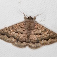 Eudesmeola lawsoni (Lawson's Night Moth) at Melba, ACT - 18 Oct 2020 by Bron