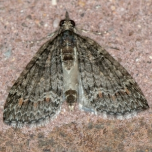 Microdes squamulata (TBC) at suppressed by Bron