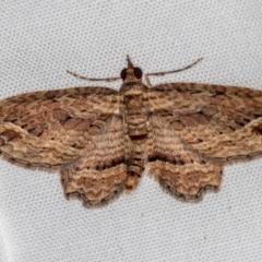 Chloroclystis filata (Filata Moth, Australian Pug Moth) at Melba, ACT - 11 Oct 2020 by Bron