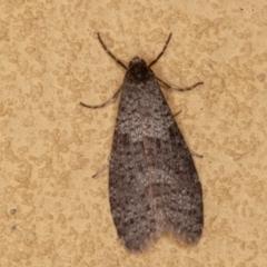 Lepidoscia adelopis (A case moth) at Symonston, ACT - 14 Jun 2021 by rawshorty