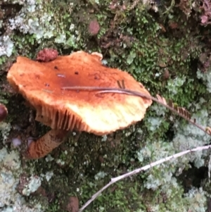 Unidentified Cap on a stem; gills below cap [mushrooms or mushroom-like] (TBC) at suppressed by Ned_Johnston