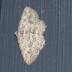 Psilosticha (genus) (A wave moth) at Higgins, ACT - 7 May 2021 by AlisonMilton