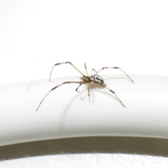 Unidentified Spider (Araneae) (TBC) at Flynn, ACT - 17 Jun 2021 by Christine