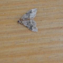 Epyaxa sodaliata (A geometer moth) at Wamboin, NSW - 30 Jan 2021 by natureguy