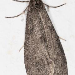 Lepidoscia (genus) (Unidentified cone case moth) at Melba, ACT - 27 Jun 2021 by kasiaaus