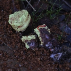 Unidentified Fungus (TBC) at Holt, ACT - 3 Jul 2021 by AlisonMilton