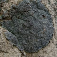 Lichen - crustose at Boro, NSW - 13 Jul 2021 by Paul4K