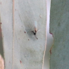 Unidentified Insect (TBC) at Castle Creek, VIC - 18 Jul 2021 by Kyliegw