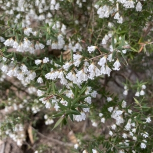 Unidentified Other Shrub (TBC) at suppressed by JanetMW