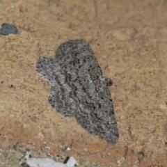 Psilosticha absorpta (Fine-waved Bark Moth) at Higgins, ACT - 31 Jul 2021 by AlisonMilton