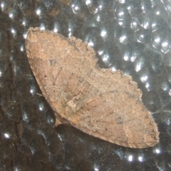 Casbia sp. (genus) (A geometer moth) at Conder, ACT - 23 Jul 2021 by michaelb