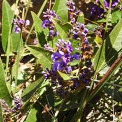 Hardenbergia violacea (False Sarsaparilla) at Kambah, ACT - 18 Aug 2021 by MatthewFrawley