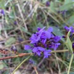 Hardenbergia violacea (False Sarsaparilla) at Deakin, ACT - 22 Aug 2021 by KL