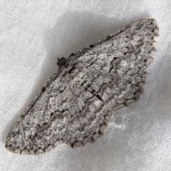 Psilosticha absorpta (Fine-waved Bark Moth) at Higgins, ACT - 25 Aug 2021 by AlisonMilton