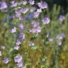 Unidentified Other Wildflower or Herb (TBC) at Binya, NSW - 3 Oct 2020 by natureguy