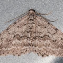 Psilosticha absorpta (Fine-waved Bark Moth) at Melba, ACT - 7 Aug 2021 by kasiaaus