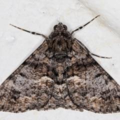 Gastrinodes argoplaca (Cryptic Bark Moth) at Melba, ACT - 11 Aug 2021 by kasiaaus
