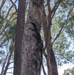 at Woomargama, NSW - 20 Feb 2021 by Darcy