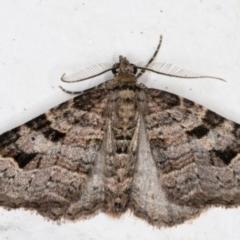 Epyaxa subidaria (Subidaria Moth) at Melba, ACT - 31 Aug 2021 by kasiaaus