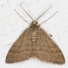 Scopula (genus) (A wave moth) at Melba, ACT - 31 Aug 2021 by kasiaaus
