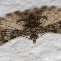 Alucita phricodes at Melba, ACT - 10 Sep 2021