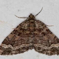 Epyaxa subidaria (Subidaria Moth) at Melba, ACT - 9 Sep 2021 by kasiaaus