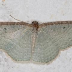 Poecilasthena pulchraria (Poecilasthena pulchraria) at Melba, ACT - 10 Sep 2021 by kasiaaus